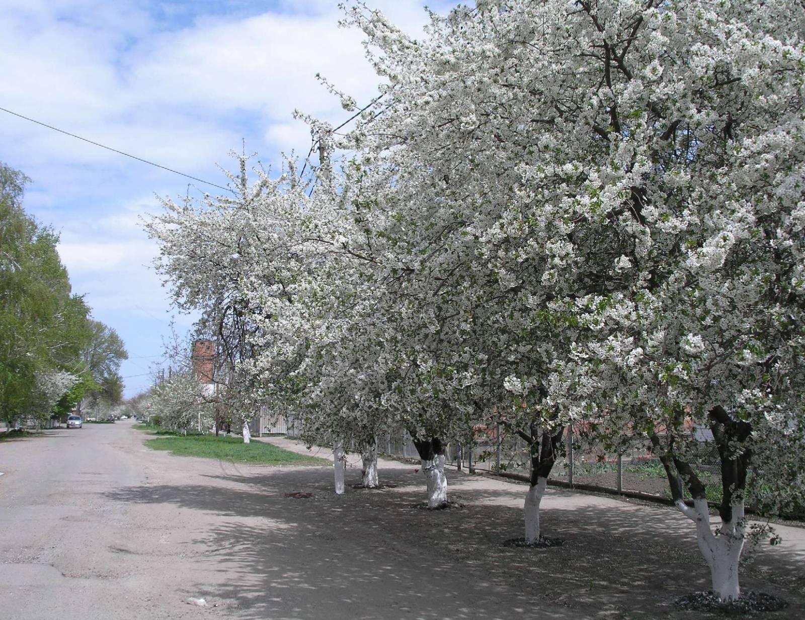 Весна на ул. Первомайской